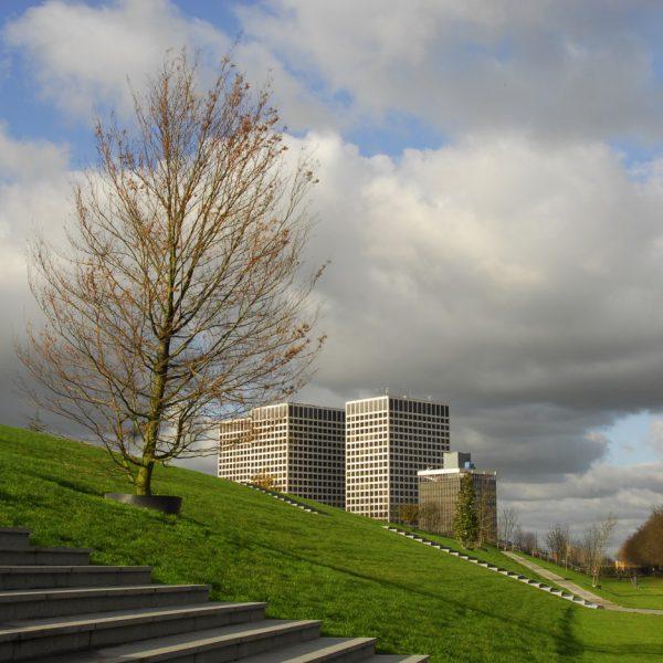 buro-sant-en-co-landschapsarchitectuur-dakpark-rotterdam-ontwerp-trap