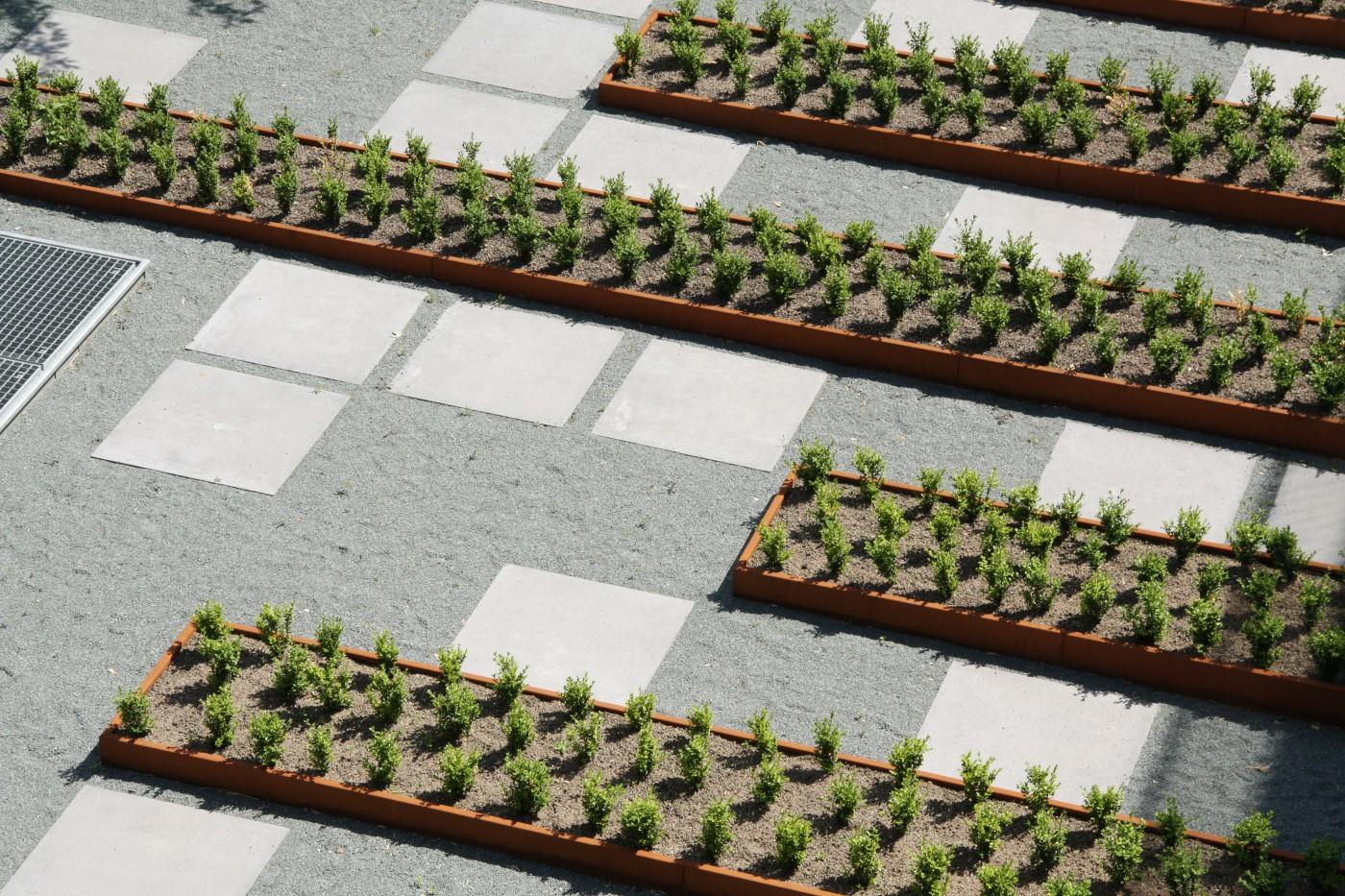 buro-sant-en-co-landschapsarchitectuur-Masira-Amsterdam-Hof B-daktuin-buxus-detail
