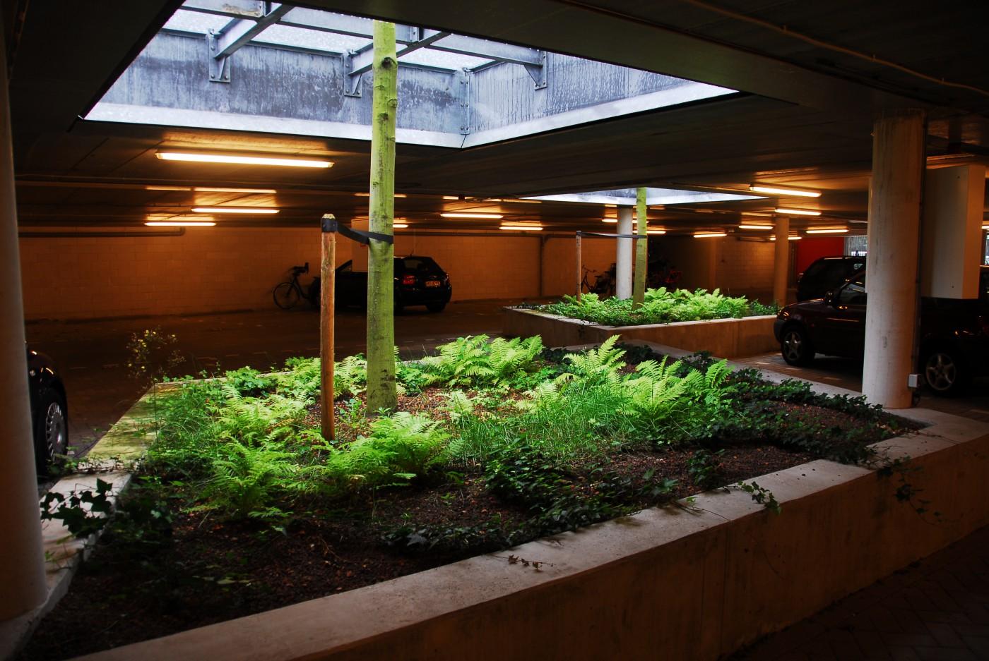 buro-sant-en-co-landschapsarchitectuur-Masira-Amsterdam-Hof-B-daktuin-noordstrook-groendak-binnentuin