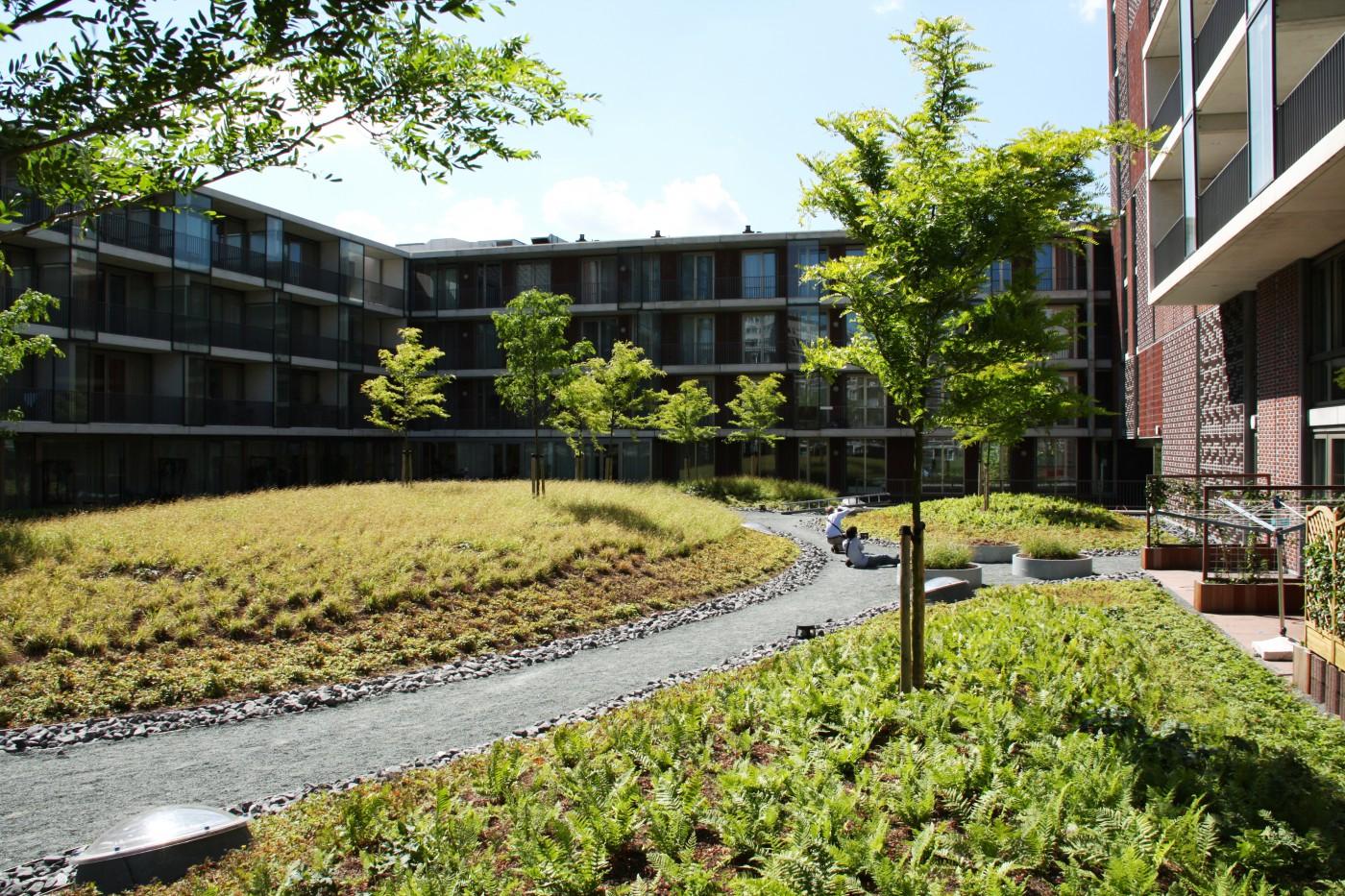 buro-sant-en-co-landschapsarchitectuur-Masira-Amsterdam-daktuin-vaste planten-heuvel