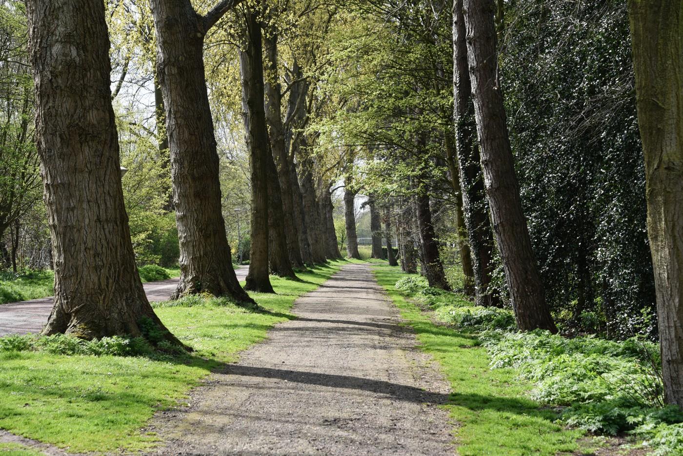 buro-sant-en-co-landschapsarchitectuur-schoterbos-haarlem-stadspark-ecologie-1