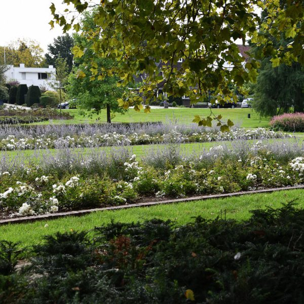 buro-sant-en-co-stadspark-sittard-renovatie-beplanting